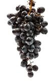 Twig of black grape Royalty Free Stock Images