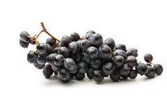 Twig of black grape Royalty Free Stock Image