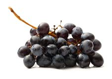 Twig of black grape Stock Photography