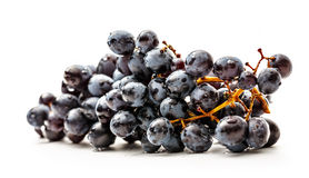 Twig of black grapes Royalty Free Stock Image