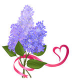 Twig blossoming lilac with a ribbon Royalty Free Stock Image