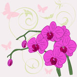 Twig blossoming orchids Royalty Free Stock Image