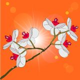 Twig blossoming orchids on a background Royalty Free Stock Photos