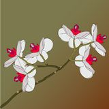 Twig blossoming orchids on a background Stock Image