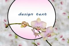 Twig blossoming orchids. A sprig of pink orchids with round frame with place for text sprinkler inequality against the background of cherry blossoms Royalty Free Stock Image