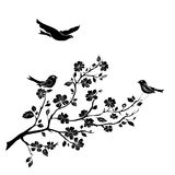 Twig cherry blossoms  and  birds Stock Images
