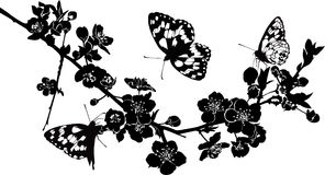 Twig cherry blossoms and butterflies. Silhouette illustration stock illustration