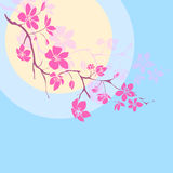 Twig cherry blossoms Stock Photo