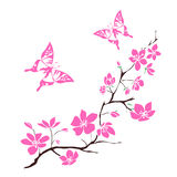 Twig cherry blossoms Royalty Free Stock Photography