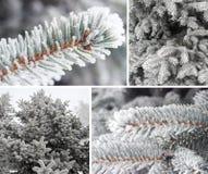 Twig Christmas tree Stock Images