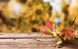 Twig with colorful withering autumn leaves Royalty Free Stock Photo
