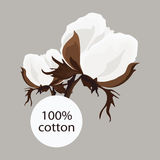 Twig of cotton. With the inscription 100% beige background Stock Image