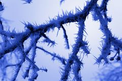 Twig covered with crystals of ice Stock Images