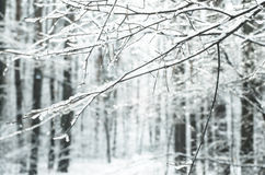 Twig covered with snow Royalty Free Stock Images