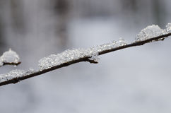 Twig covered with snow Stock Images