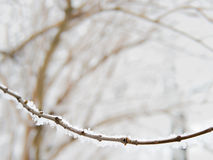 Twig covered with snow, wintertime, copyspace Stock Images
