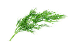 Twig Of Dill Royalty Free Stock Image