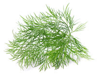 Twig of dill Stock Image