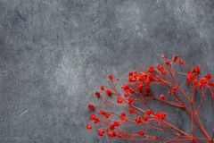 Twig of elegant small red decorative flowers on dark gray stone background. Wedding Valentine mothers day concept. Greeting card poster banner placeholder royalty free stock photo