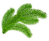 Twig of evergreen. Fir on white. Vector clip-art Stock Image