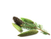 Twig of fir with cones Royalty Free Stock Photo