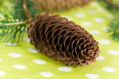 Twig of fir tree with brown cones Stock Image