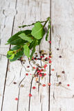 Twig of fresh laurel and peppercorns Stock Photos
