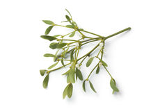 Twig of fresh mistletoe isolated Stock Images