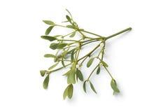 Twig of fresh mistletoe isolated Stock Images