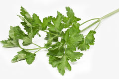 Twig of fresh parsley Royalty Free Stock Photography