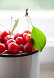 Twig with green leaf and cherries Royalty Free Stock Image