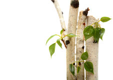 Twig and green leaf frame isolated  white Royalty Free Stock Photos