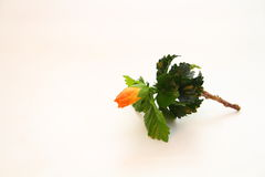 Twig with green leaves and unopened bloom Stock Image
