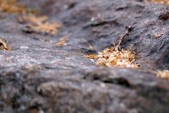 Twig on ground