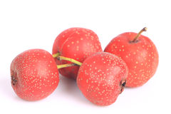 Twig of Hawthorn berries Stock Images