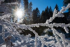 Twig with hoarfrost in the sunny forest royalty free stock photo