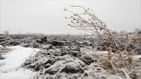 Twig with hoarfrost in winter field. December landscape stock video