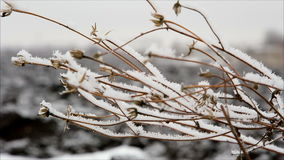 Twig with hoarfrost in winter field stock video footage
