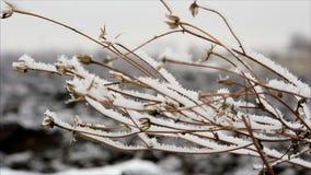 Twig with hoarfrost in winter field. December landscape stock video footage