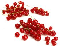 Twig of juicy red currant Royalty Free Stock Image