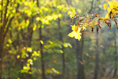 Twig and leaf fall in forest Stock Images
