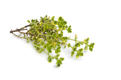 Twig of lemon thyme Royalty Free Stock Photography