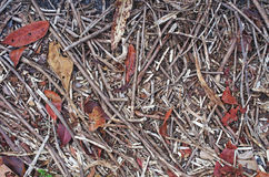 Twig litter on the floor. Twig litter with dry leaf on the floor as background Stock Images