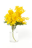 Twig of mimosa in vase Stock Image