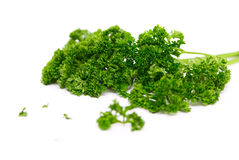 Twig of a parsley Royalty Free Stock Image