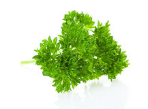 Twig of parsley Stock Photography