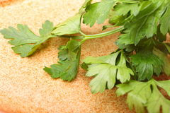 Twig of parsley background Stock Images