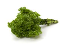 Twig of parsley isolated Stock Image