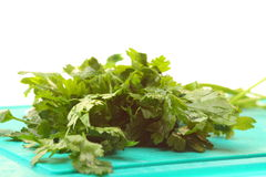 Twig of parsley isolated Royalty Free Stock Image