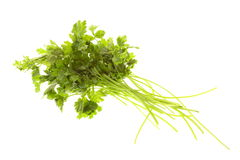 Twig of parsley isolated Royalty Free Stock Photos